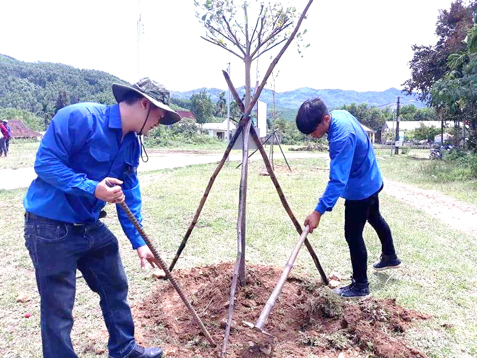 The young union in Quang Nam respond the WDCD by planting tree-compressed